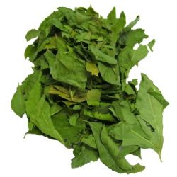 Curry Leaves | Sweet Neem | Buy Online | Herbs | Spices | UK | Europe